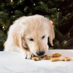 Homemade peanut butter dog treats are a sweet gift for your puppy this Christmas! The biscuits require only four ingredients! | www.ifyougiveablondeakitchen.com