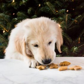 Homemade peanut butter dog treats are a sweet gift for your puppy this Christmas! The biscuits require only four ingredients!   www.ifyougiveablondeakitchen.com