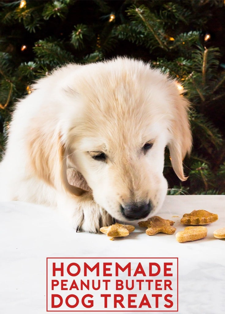 Homemade peanut butter dog treats are perfect for Christmas or puppy birthdays! Make them for your golden retriever. The recipe requires only four ingredients (peanut butter, pumpkin purée, flour and eggs). | www.ifyougiveablondeakitchen.com