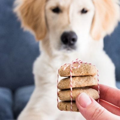 Stack of snickerdoodle cinnamon dog treats golden retriever puppy