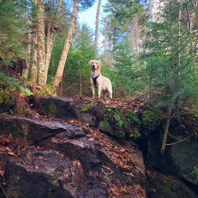 Easy Hikes for Dogs in Connecticut