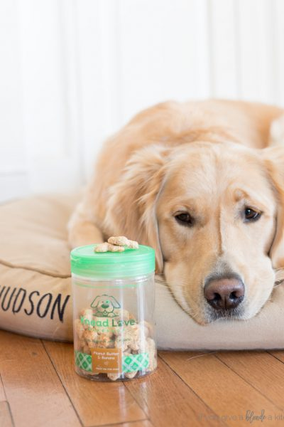 dog biscuit baking mix knead love bakeshop golden retriever